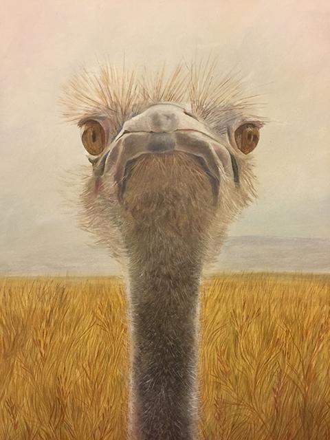 Ostrich, Donna McCafferty